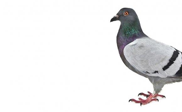 Bird Control, Bird Waste
