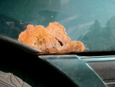 Car rust Removal Services