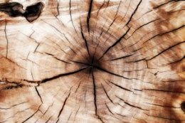 tree stump closeup
