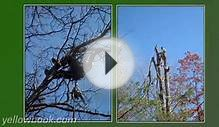 Four Seasons Tree Service LLC - Pigeon Forge, TN