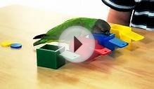 Kili Senegal Parrot - Colored Boxes Trick