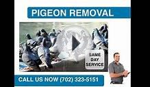 Pigeon Removal Summerlin, NV | 702 323 5151