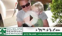 Wildlife Removal Services | Pest Control in San Diego
